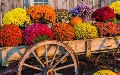Planting Fall Colors & Veggies