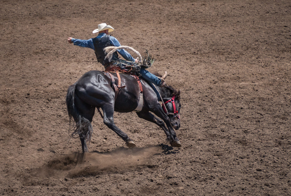 What's New at Rodeo Houston?