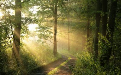 The Great Outdoors: Top Local Nature Trails